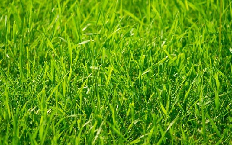 Сажаем траву